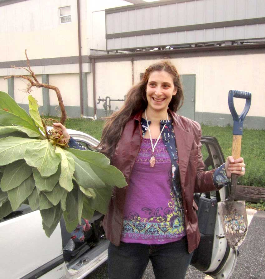 Adrienne Gomez with giant Mullein
