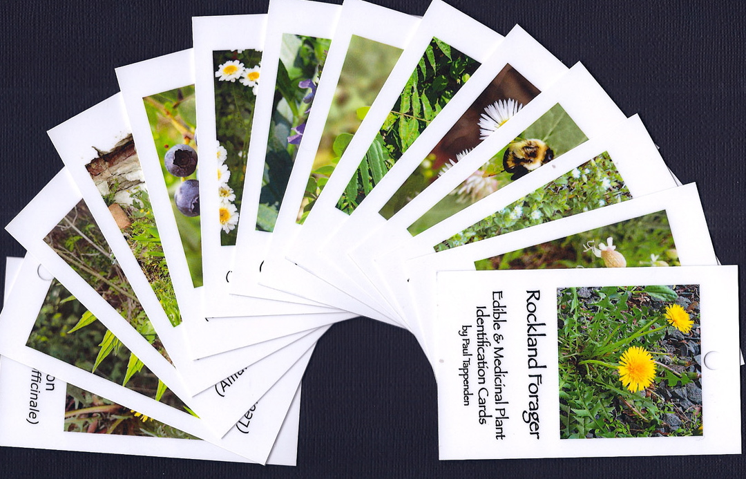 wild plant field id cards
