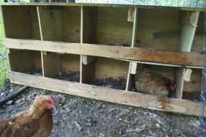 G chicken roost