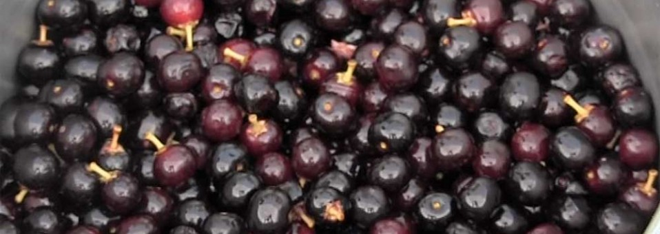 Wild Black Cherries