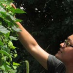 Sachiko and Adrienne picking hops