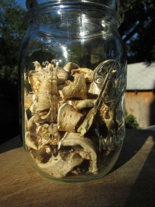 Dried mushrooms in a ball jar