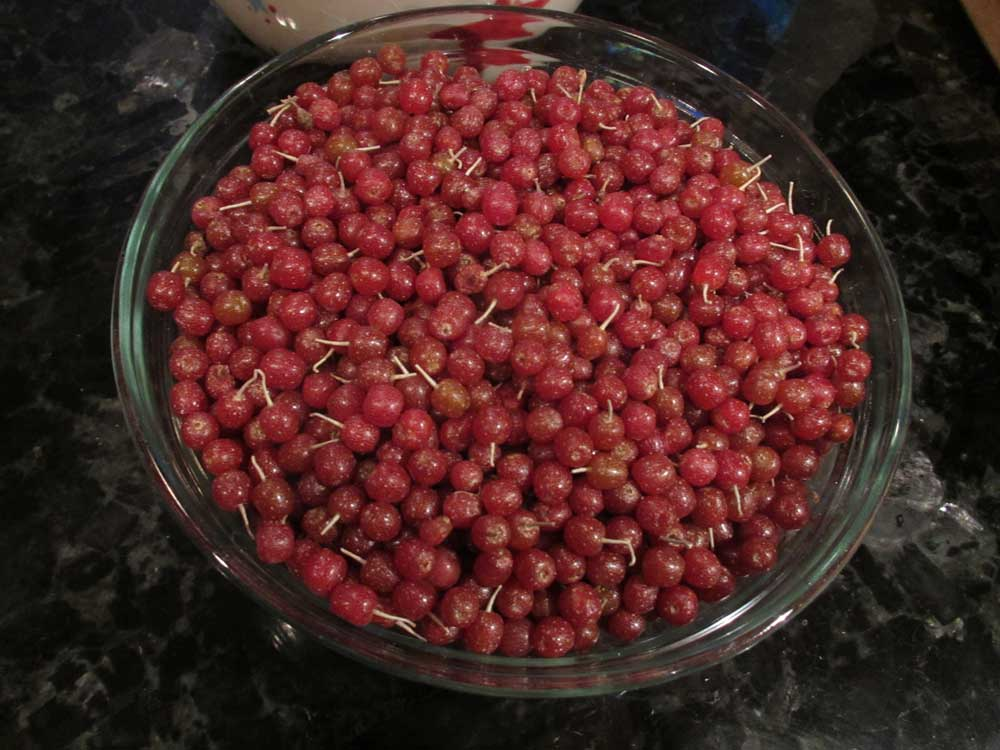Autumn Olive Berries in a bowl