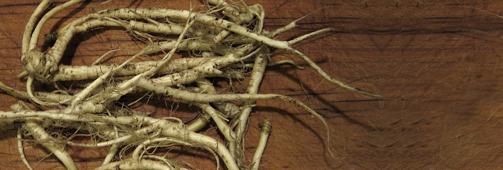 Garlic mustard roots are just one of the many buried treasures that can be harvested at this time of year.