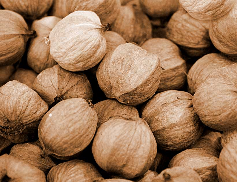 Hickory-nuts