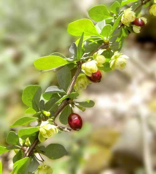 Flowers-&-berries