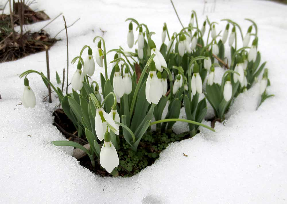 Flowers-in-snow